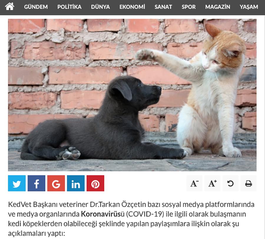 'Koronavirüs sokak hayvanlarından bulaşmaz'