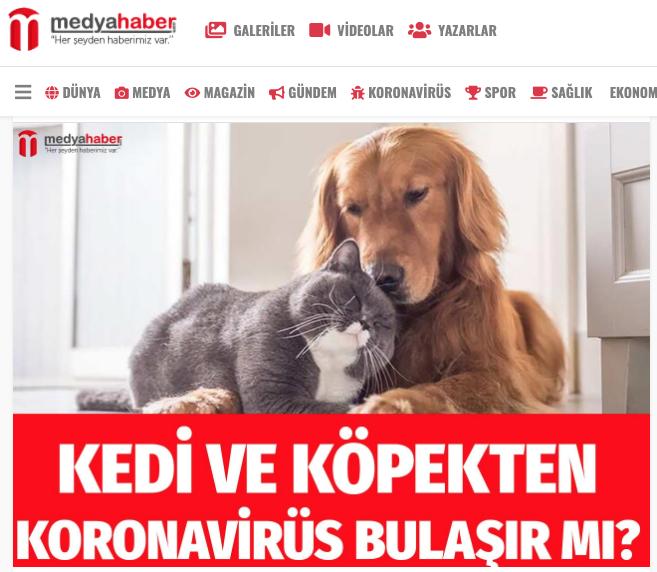 Kedi ve köpekten koronavirüs bulaşır mı? İşte cevabı