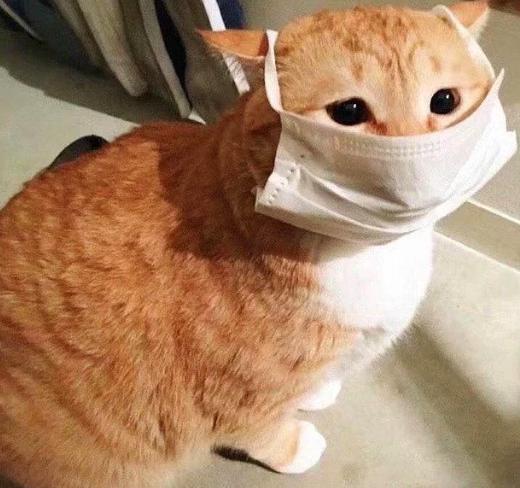 Kedi ve köpekten korona geçmez