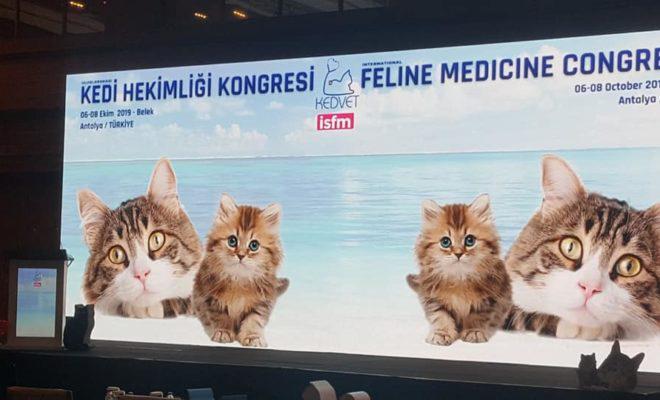 Antalya kediler için uluslararası konferansa ev sahipliği yaptı