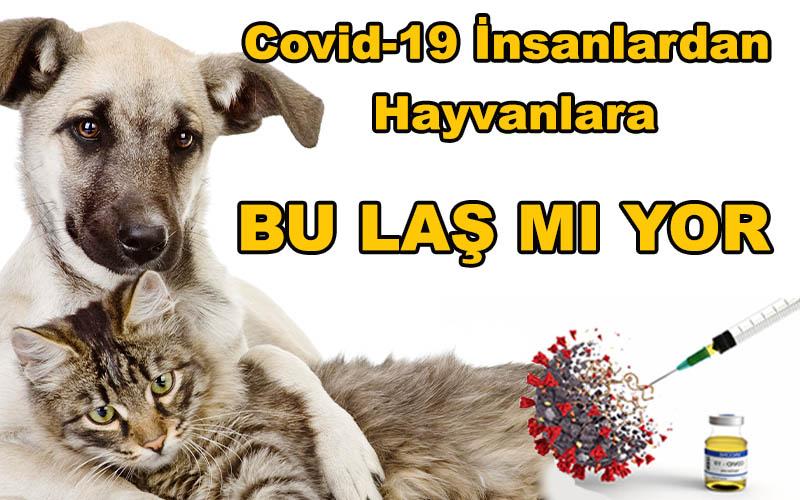 Covid-19 İnsanlardan Hayvanlara BU - LAŞ – MI – YOR ! - Dr. Tarkan Özçetin